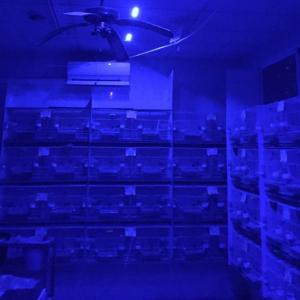 Tira LED 12v Efecto Luna para programador Amanecer Anochecer