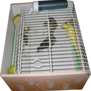 Expositor de sobremesa 3 en 1 para venta de pájaros y transporte