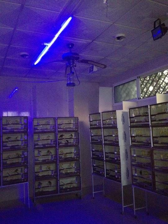 SET LEDS 12V DE LUZ NOCTURNA AZUL EFECTO LUNA +ADAPTADOR. OPCION 50 CM Y 1 METRO