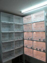 Conjunto de frente, rejilla, separador y dos posaderos para jaulón de cría J1